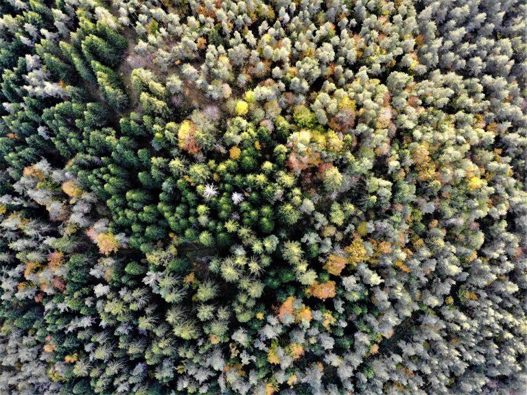 vue aérienne sapins drone DJI Mavic Air automne